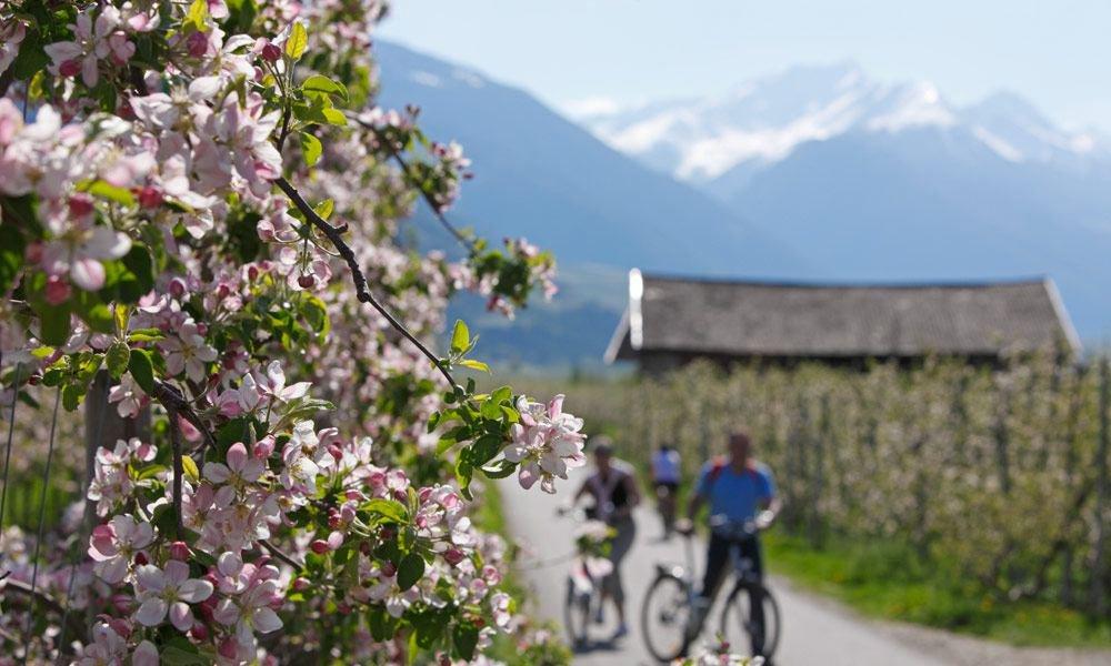 Den Frühling in den Bergen in vollen Zügen genießen