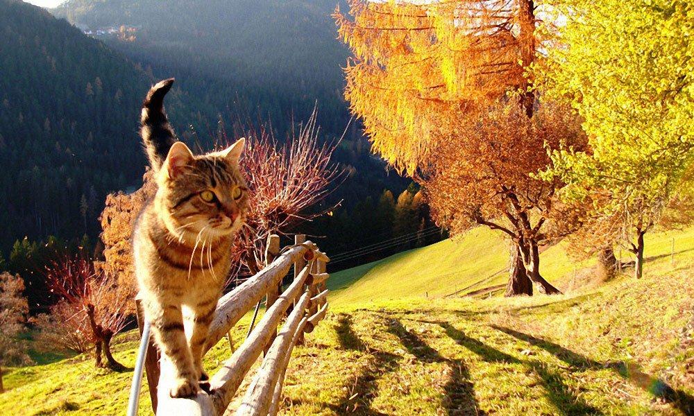 Cane o gatto – Sul Maso Thalerhof troverete sempre un compagno di giochi